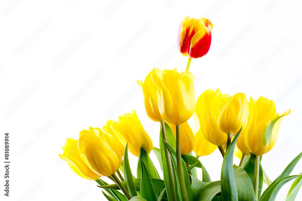 tło żółty na białym tle - powiększenie