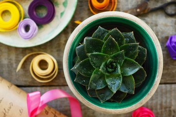 Stone rose cactus, wrap paper roll, set of colorful ribbons and