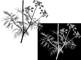 white and black illustration with dill