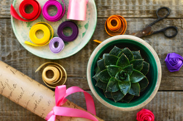 Stone rose cactus, wrapping paper, ribbons and scissors