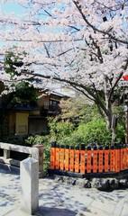 祗園白川の桜
