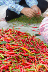 pile of chilli in local market, thailand