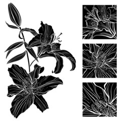 Lily. Black and white vector illustration. Can be greeting card