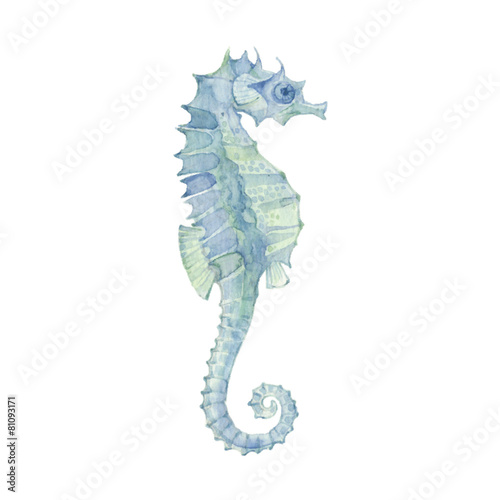 Sea horse isolated on a white background.Vector, watercolor hand - 81093171