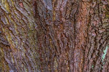 Rinde eines alten Baumes