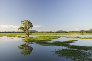 Einzelner Baum in einem See