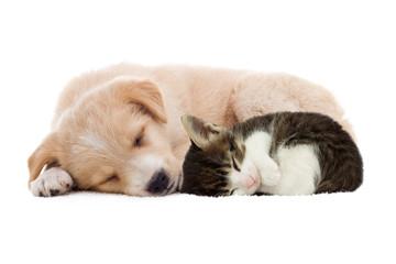 Puppy and kitten sleeping