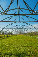 close up view on big empty opened greenhouse for young trees agr