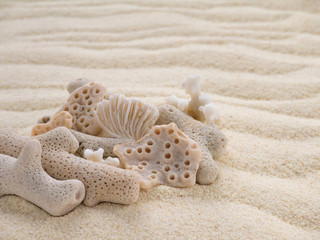 Corals on the sandy beach