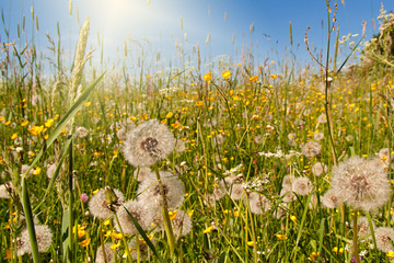 Sommerwiese ©yvonneweis