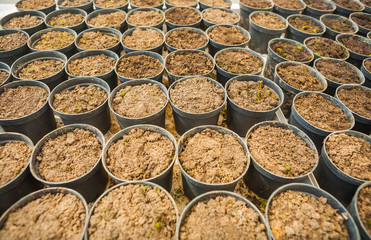 very big set of pots with ground for seedlings agricultural conc