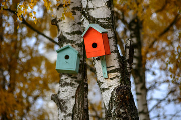 bird house nesting-box hang on birch tree trunk