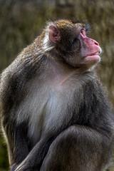 Portrait of monkey 2
