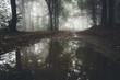 dreamy forest landscape with light reflecting in water