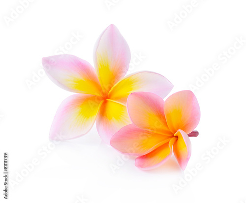 Frangipani, Pumeria, Frangipanni, isolated on white background