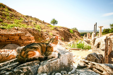 Cat sitting on the stone