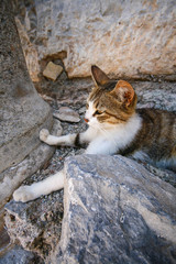 Cat behind the stone
