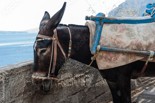 Plexiglas Ezel Asini a Santorini 1