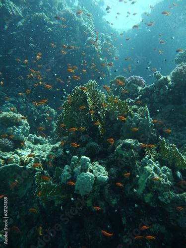 Panel Szklany Fische im Wasser 2