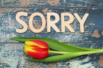 Sorry written with wooden letters on rustic wood and tulip