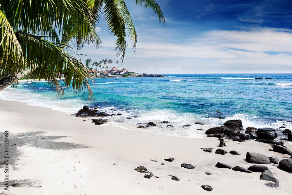 bahamy światło słoneczne drzewa - powiększenie