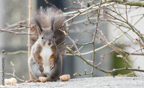 Fotobehang Ezel Sattes Eichhörnchen