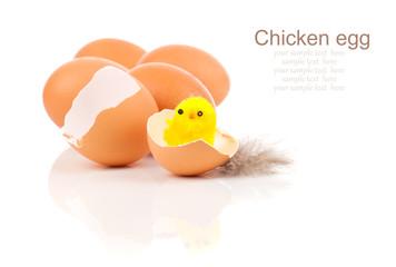 broken egg with chicken, on white background