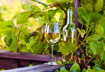 sweet wine in vineyard
