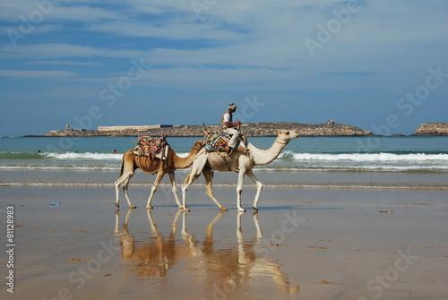 Keuken foto achterwand Marokko Dromadaires sur la plage
