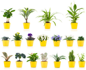 set of green house plant, isolated on white background
