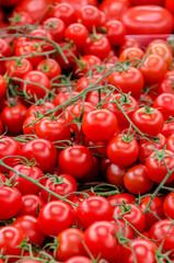 Tomatos on market