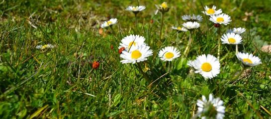 Hintergrund - Frühlingswiese