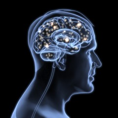 Brain. 3D. Active brain