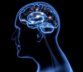 Brain. 3D. Human brain