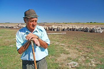 Shepherd with his grazing sheep