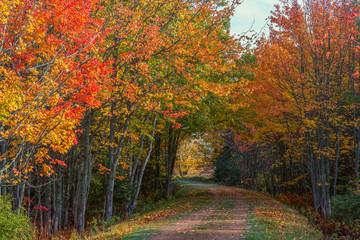 Fall Trail on Prince Edward Island