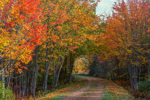 Keuken foto achterwand Canada Fall Trail on Prince Edward Island