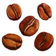 coffee beans vector illustration  hand drawn  painted watercolor - 81135308