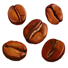 coffee beans vector illustration  hand drawn  painted watercolor