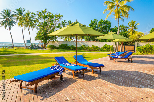 Blue sunbeds at the swimming pool against palm trees - 81135726