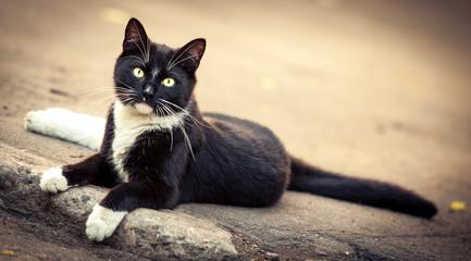 Кот в смокинге