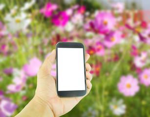 Hand holding smart phoner on flower background