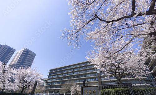 Aluminium Kersen 外務省 満開の桜 ソメイヨシノ