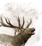Bull Elk Watercolor