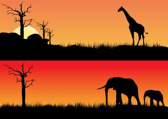 Africa sunset and animals
