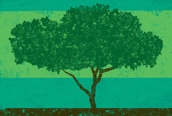 Wide Oak tree