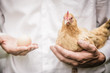 Paradox of the Chicken and the Egg - 81144787
