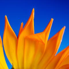 Лепесток цветок