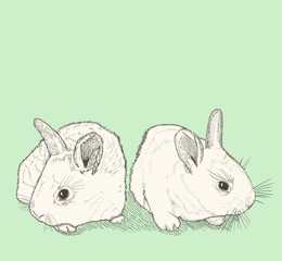 two bunnies drawing
