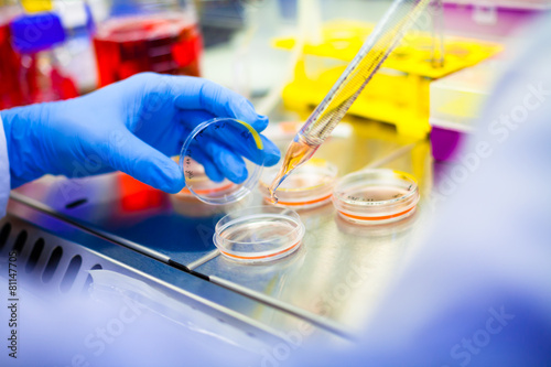 Laboratory work with cells and tissue cultures in Flowbox - 81147705